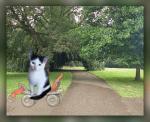 Katten humor30000