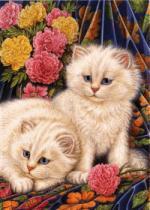 katten/div43679