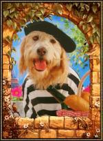 Honden humor3