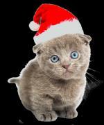 kerst/dieren2215989