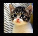 Katten humor11