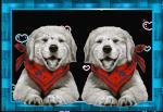 honden humor5000