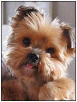 Honden/lief4004004