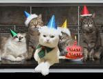 verjaardag dieren44422