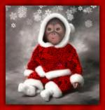 kerst/dieren221598