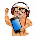 dieren muziek20303030