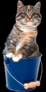 katten humor9999