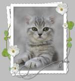 katten/lief303030