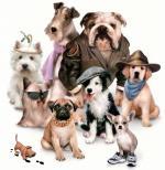 honden/lief88888