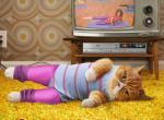 Katten humor304040
