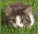 katten/lief0000