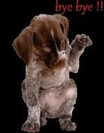 honden/lief000