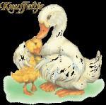 knuffel559