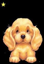honden14