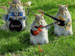 dieren muziek9999