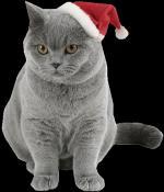 kerst/dieren0000