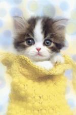 katten/lief99999