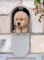 Honden/lief0000