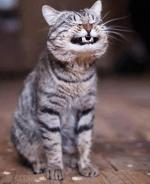 katten humor00000