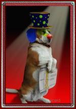 Honden humor03030