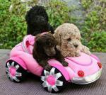 honden/lief