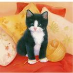 katten/lief3000